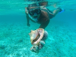 Conch & Urchins - Tobago Cays